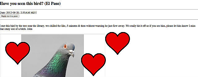 Pigeon Missed Connection El Paso