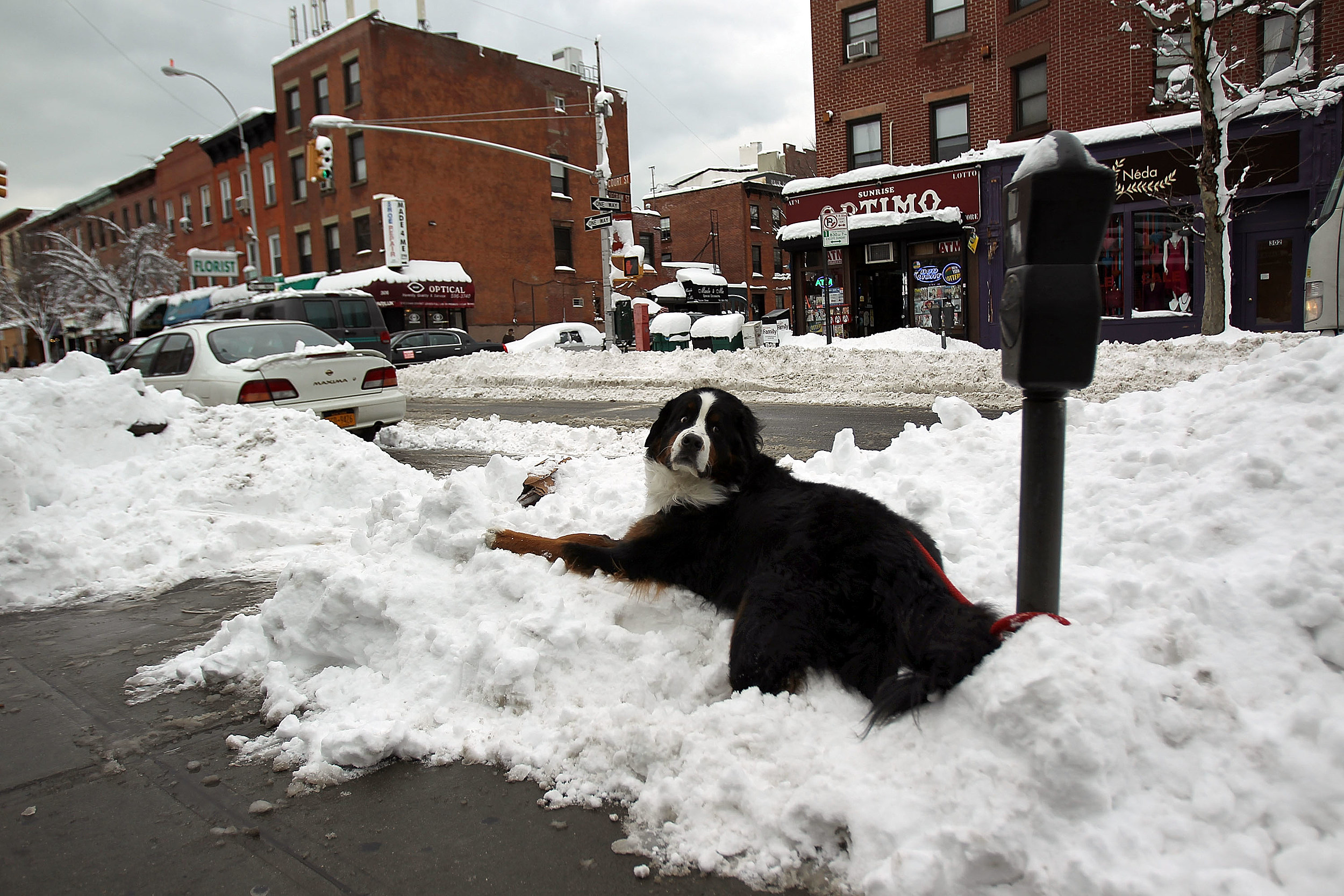 Safety tips for pets during winter