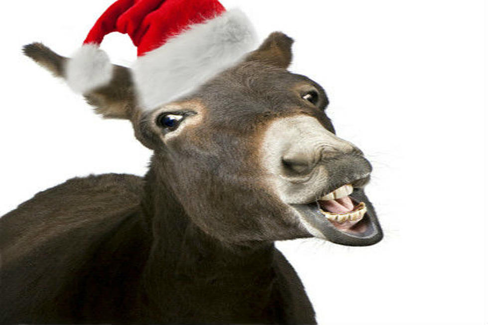 a present from the buzz adams morning show dominick the donkey - Dominick The Donkey Christmas Song